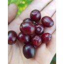 Kornelkirschen Fruchtaufstrich