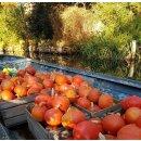 Kürbis Orange Apfel Gemüseaufstrich