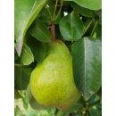 Birnen Ingwer Fruchtaufstrich