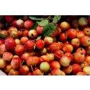 Zierapfel Fruchtaufstrich